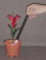 Flower From Wand In Pot
