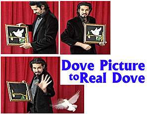 Dove Picture to Real Dove - Tora Magic