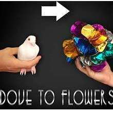 Dove To Flower