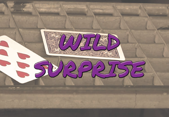 Wild Surprise - Bicycle
