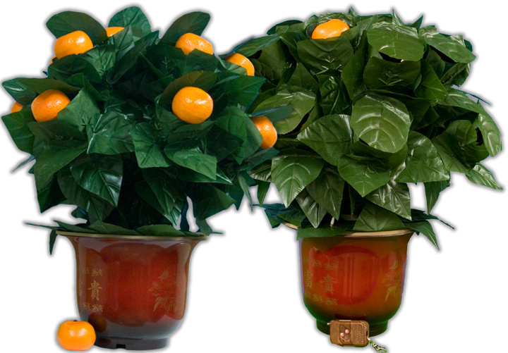 Orange Tree Illusion