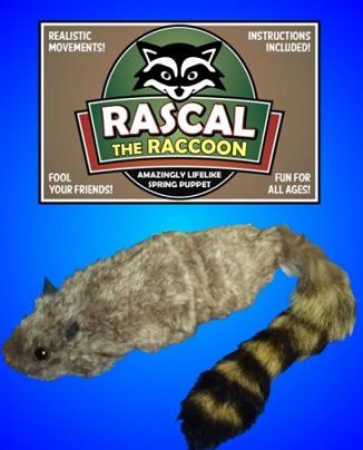 Rascall The Raccoon